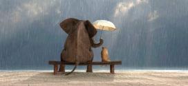 La gentilezza rende migliore la vita: ecco perché