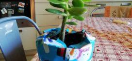 L'albero di Giada: ecco perché bisogna procurarsela per il nuovo anno