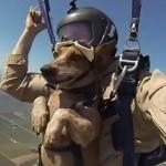 Cane e paracadute