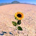 In cosa consiste la resilienza e perchè serve nella vita?