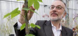 Bisogna piantare alberi: lo dice anche la Scienza